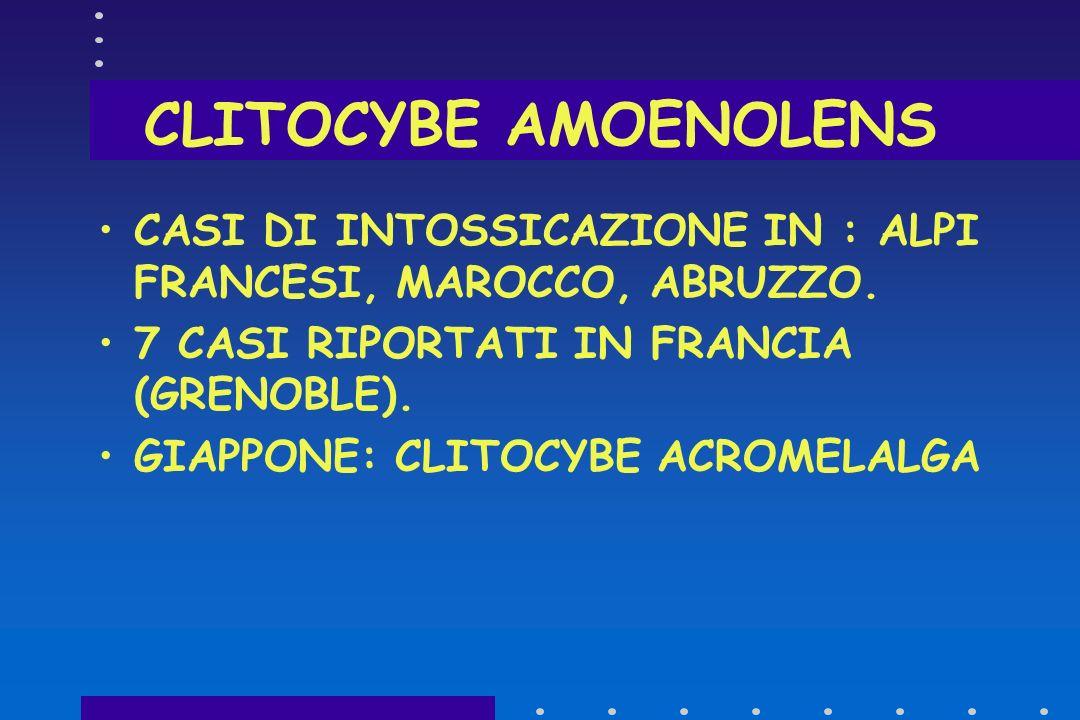 CLITOCYBE AMOENOLENS CASI DI INTOSSICAZIONE IN : ALPI FRANCESI, MAROCCO, ABRUZZO. 7 CASI RIPORTATI IN FRANCIA (GRENOBLE).
