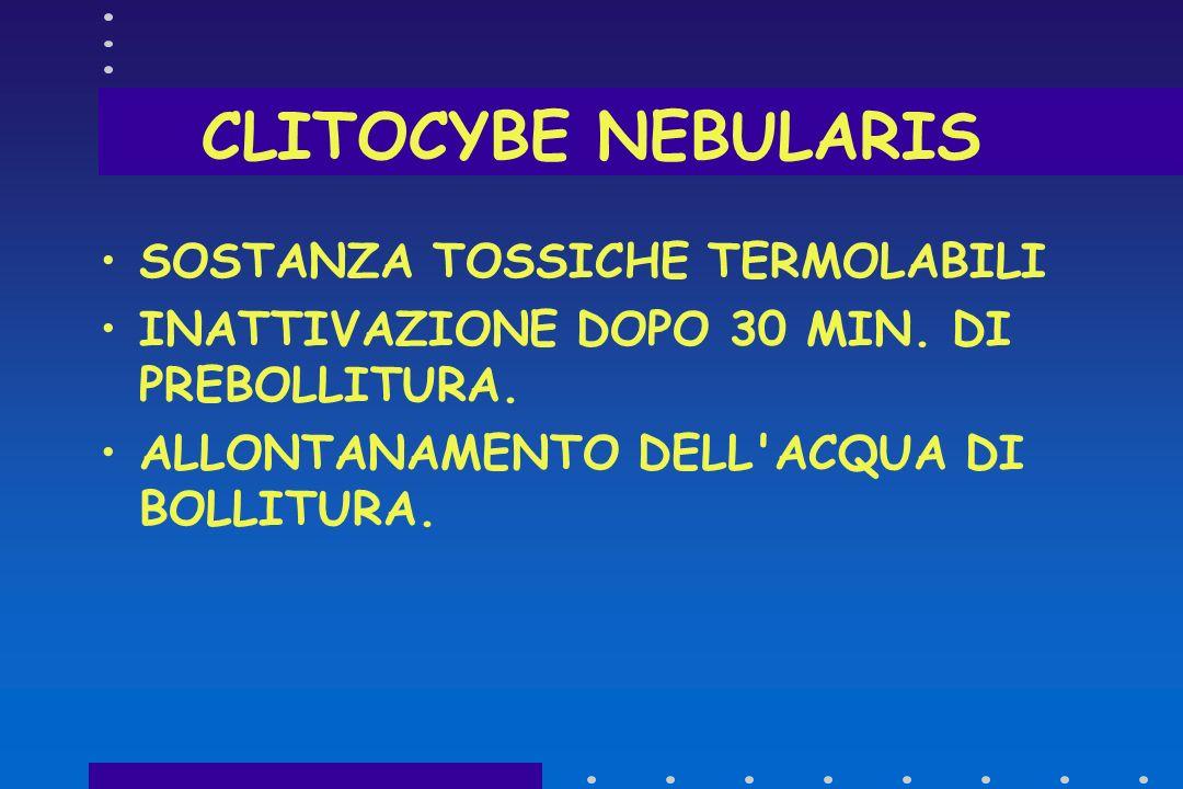 CLITOCYBE NEBULARIS SOSTANZA TOSSICHE TERMOLABILI