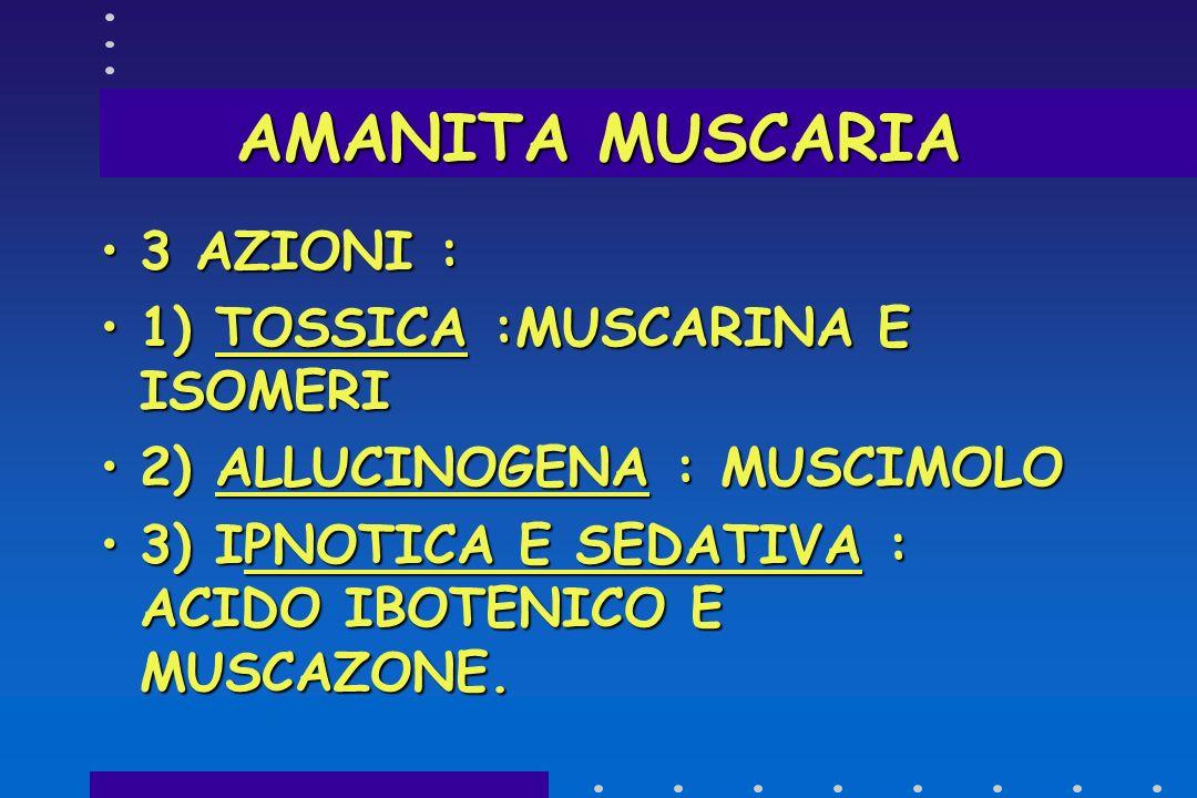 AMANITA MUSCARIA 3 AZIONI : 1) TOSSICA :MUSCARINA E ISOMERI