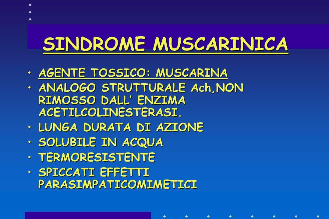 SINDROME MUSCARINICA AGENTE TOSSICO: MUSCARINA