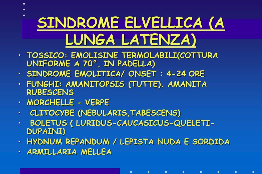 SINDROME ELVELLICA (A LUNGA LATENZA)