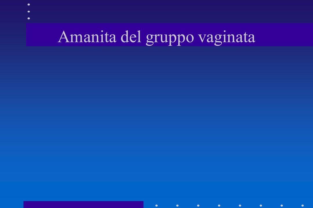 Amanita del gruppo vaginata
