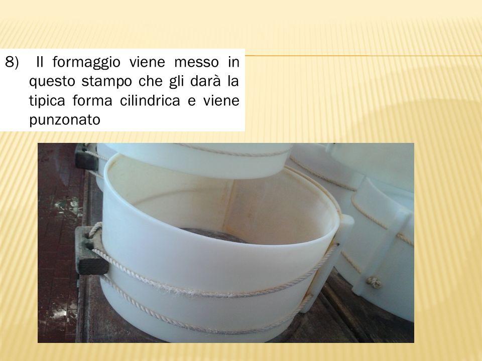 8) Il formaggio viene messo in questo stampo che gli darà la tipica forma cilindrica e viene punzonato