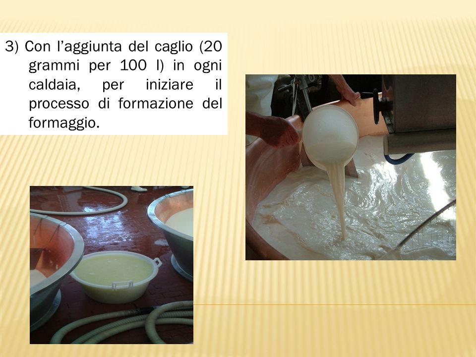 3) Con l'aggiunta del caglio (20 grammi per 100 l) in ogni caldaia, per iniziare il processo di formazione del formaggio.