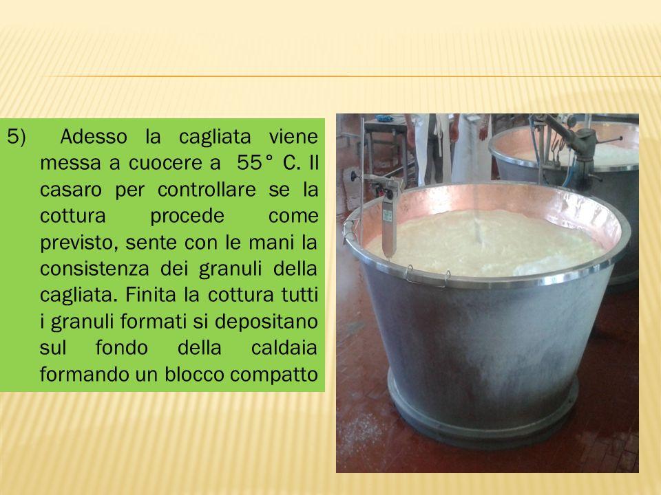5) Adesso la cagliata viene messa a cuocere a 55° C