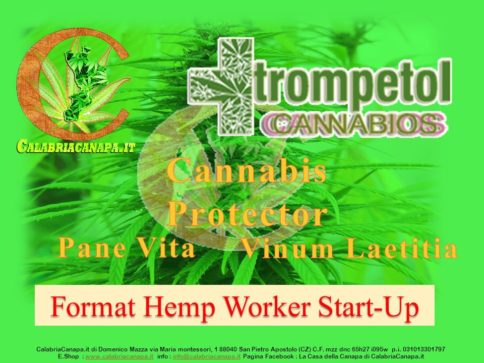 Format Hemp Worker Start-Up