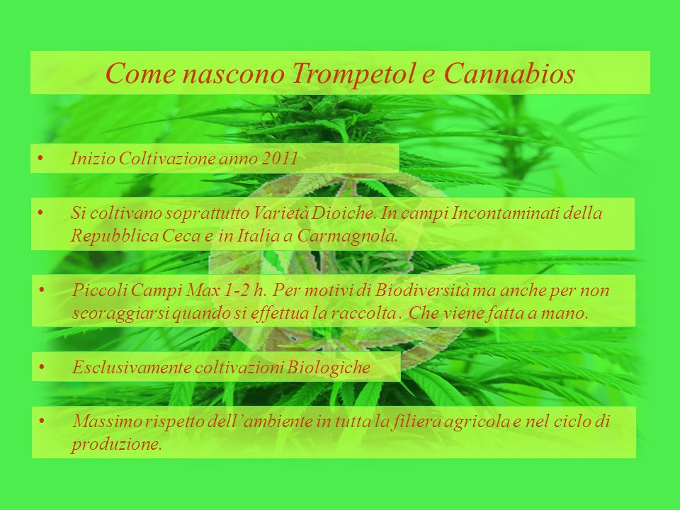 Come nascono Trompetol e Cannabios