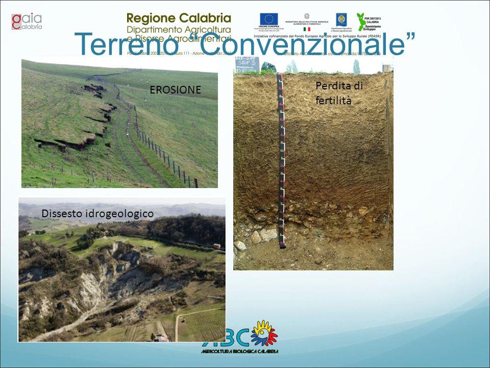 Terreno Convenzionale
