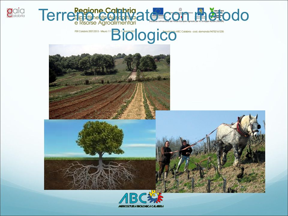 Terreno coltivato con metodo Biologico