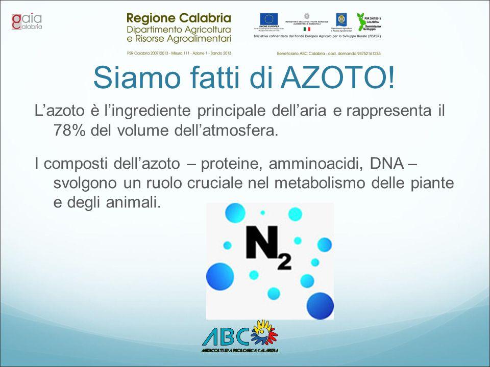 Siamo fatti di AZOTO! L'azoto è l'ingrediente principale dell'aria e rappresenta il 78% del volume dell'atmosfera.