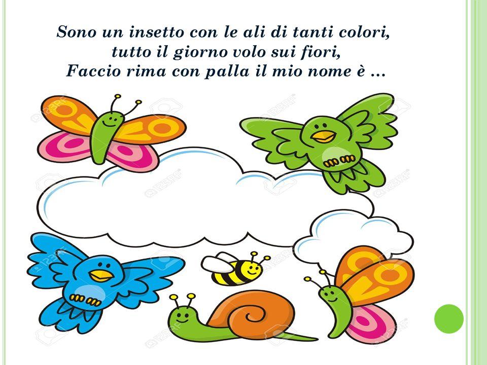 Sono un insetto con le ali di tanti colori,