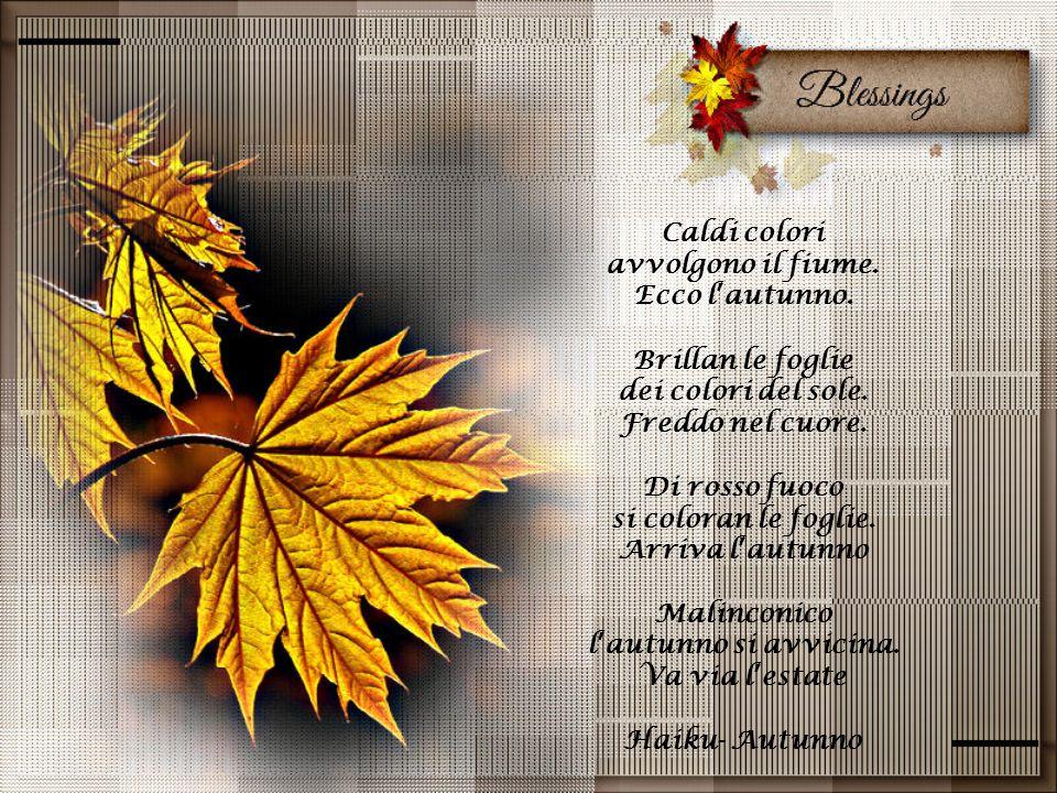 Caldi colori avvolgono il fiume. Ecco l'autunno. Brillan le foglie. dei colori del sole. Freddo nel cuore.