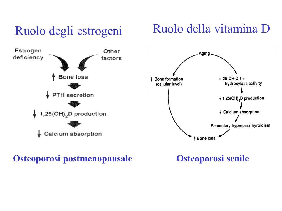 Ruolo della vitamina D Ruolo degli estrogeni