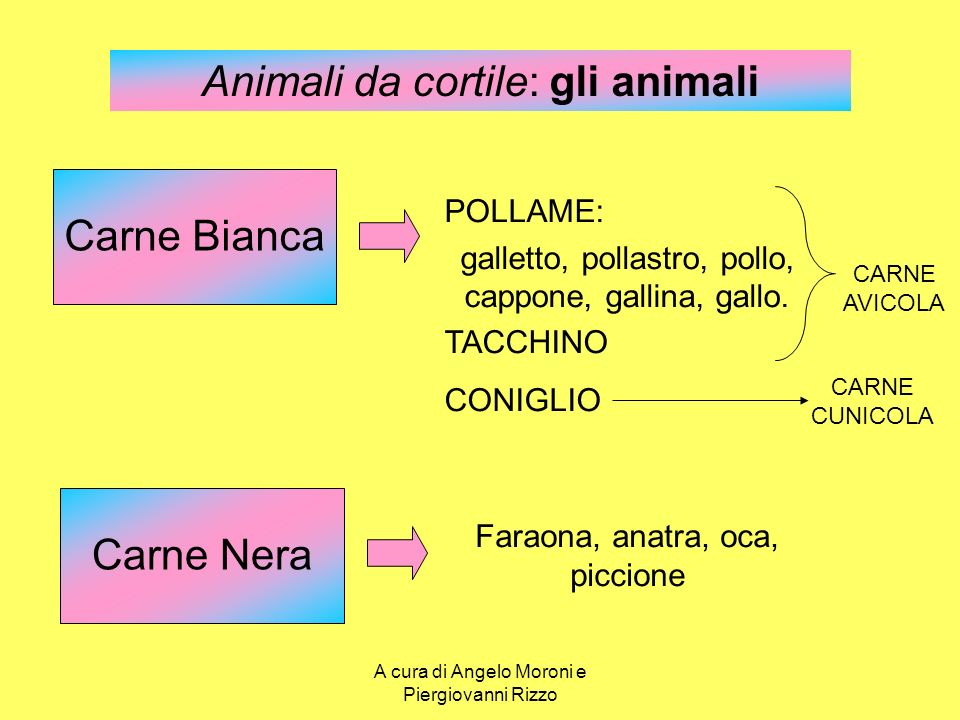 Animali da cortile: gli animali