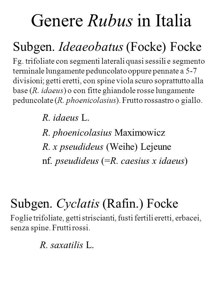 Genere Rubus in Italia Subgen. Ideaeobatus (Focke) Focke R. idaeus L.