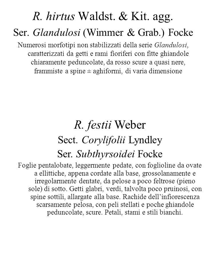R. hirtus Waldst. & Kit. agg.