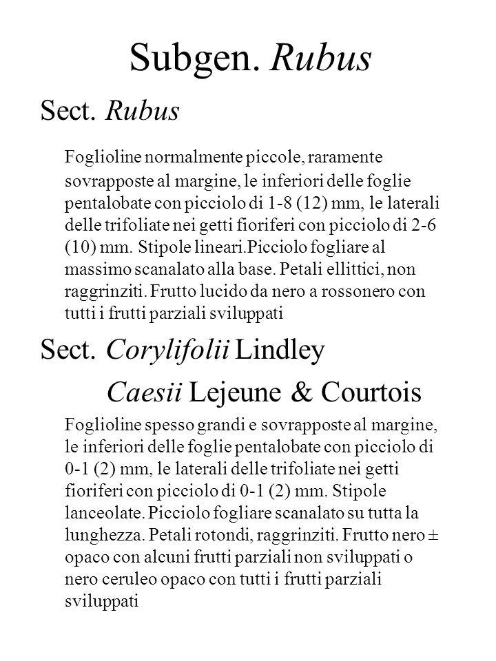 Subgen. Rubus Sect. Rubus