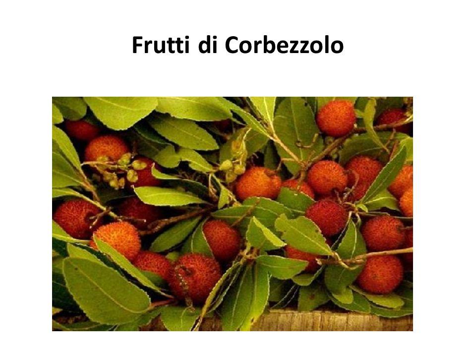 Frutti di Corbezzolo
