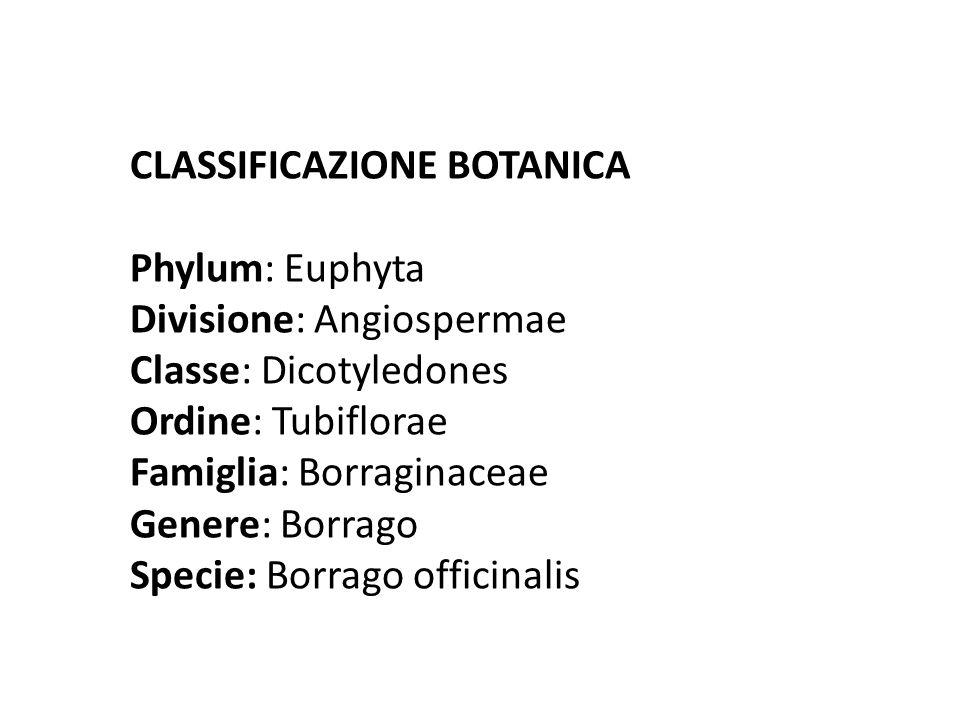 CLASSIFICAZIONE BOTANICA Phylum: Euphyta Divisione: Angiospermae Classe: Dicotyledones Ordine: Tubiflorae Famiglia: Borraginaceae Genere: Borrago Specie: Borrago officinalis