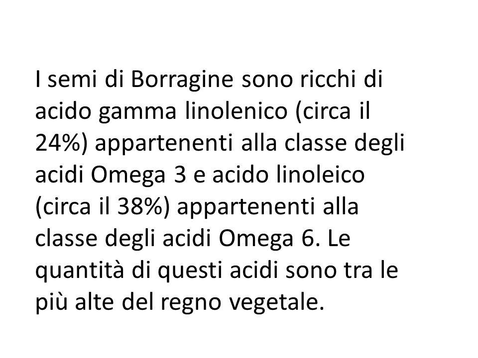 I semi di Borragine sono ricchi di acido gamma linolenico (circa il 24%) appartenenti alla classe degli acidi Omega 3 e acido linoleico (circa il 38%) appartenenti alla classe degli acidi Omega 6.