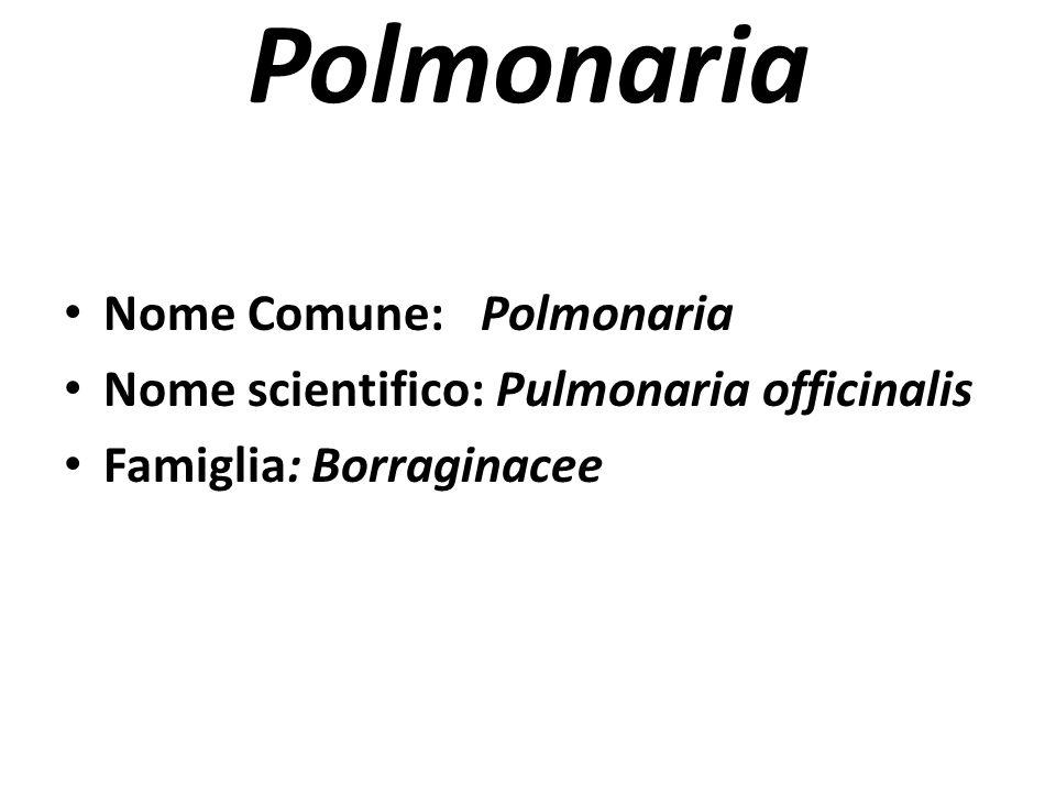 Polmonaria Nome Comune: Polmonaria