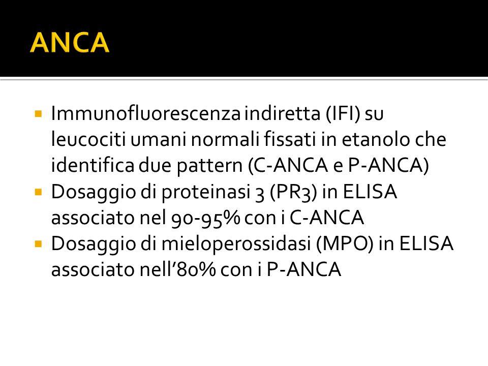 ANCA Immunofluorescenza indiretta (IFI) su leucociti umani normali fissati in etanolo che identifica due pattern (C-ANCA e P-ANCA)