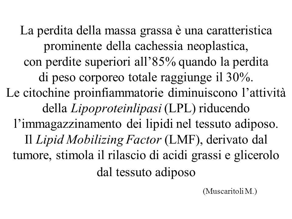La perdita della massa grassa è una caratteristica prominente della cachessia neoplastica, con perdite superiori all'85% quando la perdita di peso corporeo totale raggiunge il 30%.