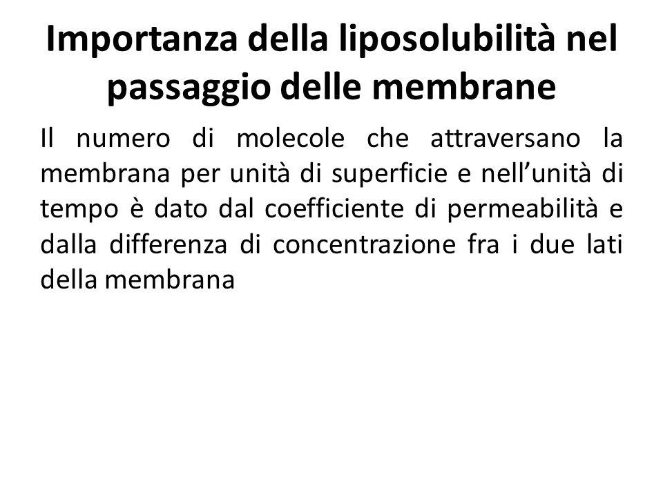 Importanza della liposolubilità nel passaggio delle membrane