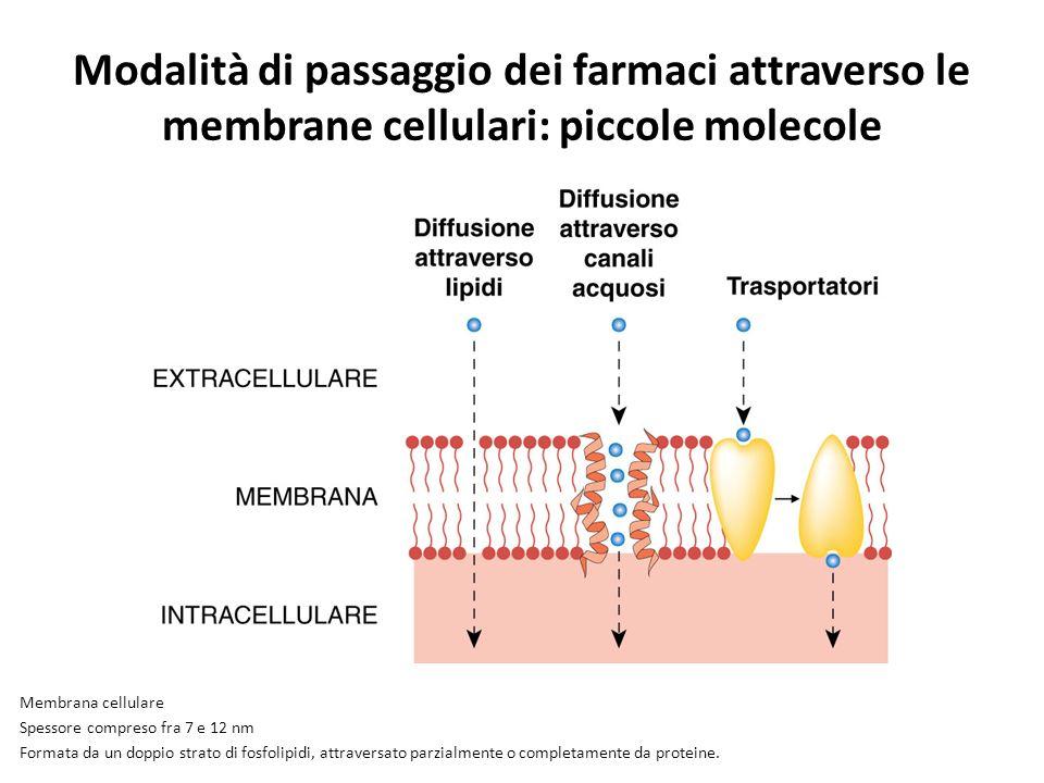 Modalità di passaggio dei farmaci attraverso le membrane cellulari: piccole molecole