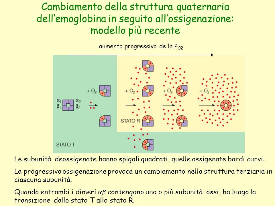 Cambiamento della struttura quaternaria dell'emoglobina in seguito all'ossigenazione: modello più recente