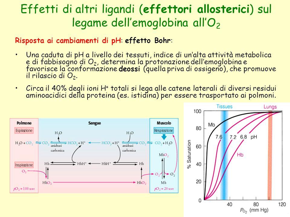 Effetti di altri ligandi (effettori allosterici) sul legame dell'emoglobina all'O2