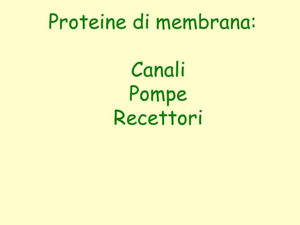 Proteine di membrana: Canali Pompe Recettori