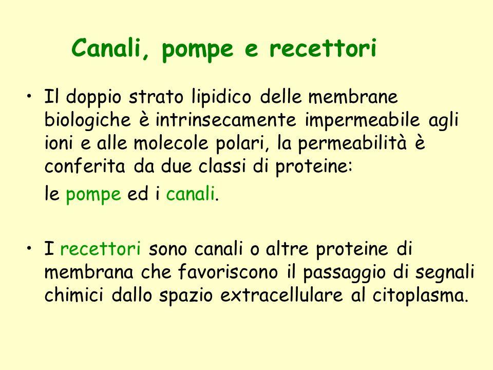 Canali, pompe e recettori