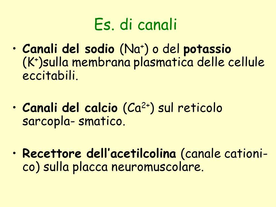 Es. di canali Canali del sodio (Na+) o del potassio (K+)sulla membrana plasmatica delle cellule eccitabili.