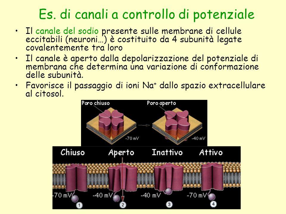 Es. di canali a controllo di potenziale