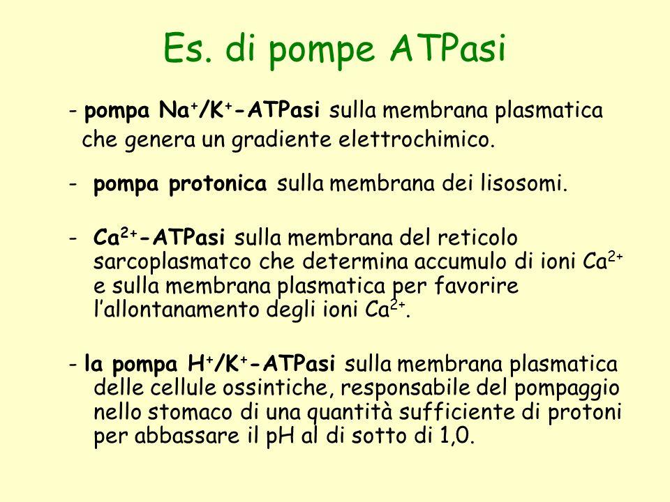 Es. di pompe ATPasi - pompa Na+/K+-ATPasi sulla membrana plasmatica