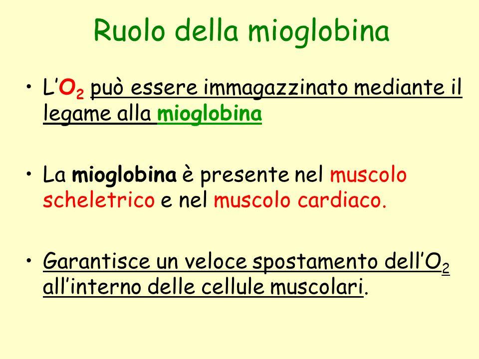Ruolo della mioglobina