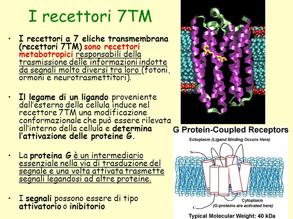 I recettori 7TM