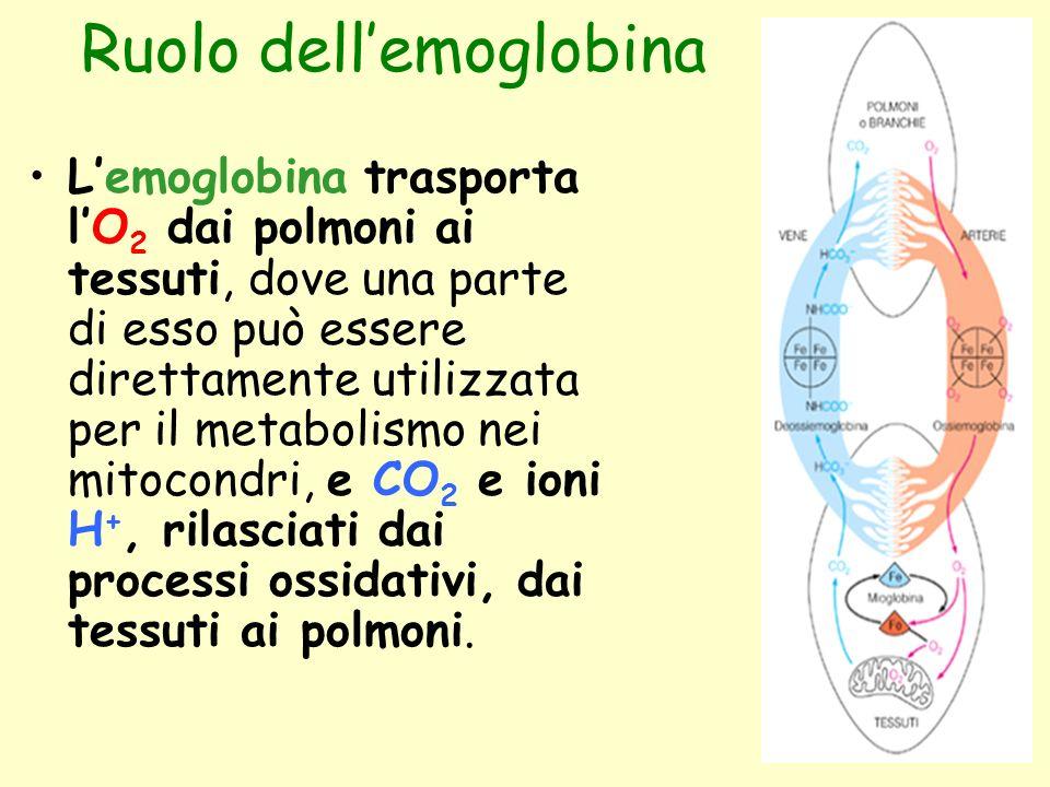 Ruolo dell'emoglobina