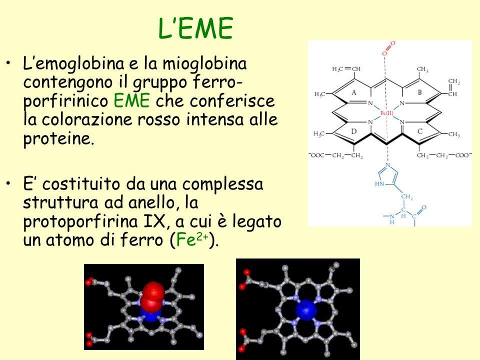 L'EME L'emoglobina e la mioglobina contengono il gruppo ferro-porfirinico EME che conferisce la colorazione rosso intensa alle proteine.