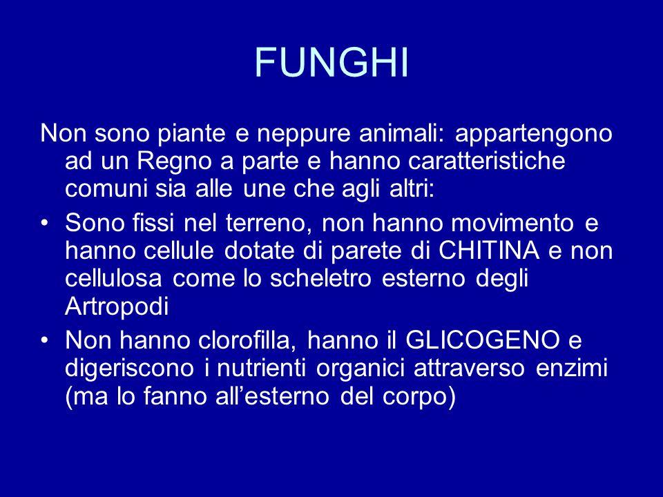 FUNGHI Non sono piante e neppure animali: appartengono ad un Regno a parte e hanno caratteristiche comuni sia alle une che agli altri: