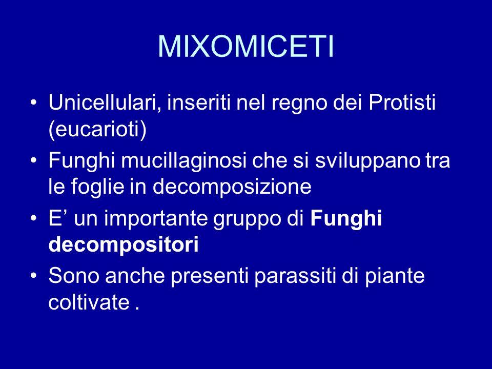MIXOMICETI Unicellulari, inseriti nel regno dei Protisti (eucarioti)