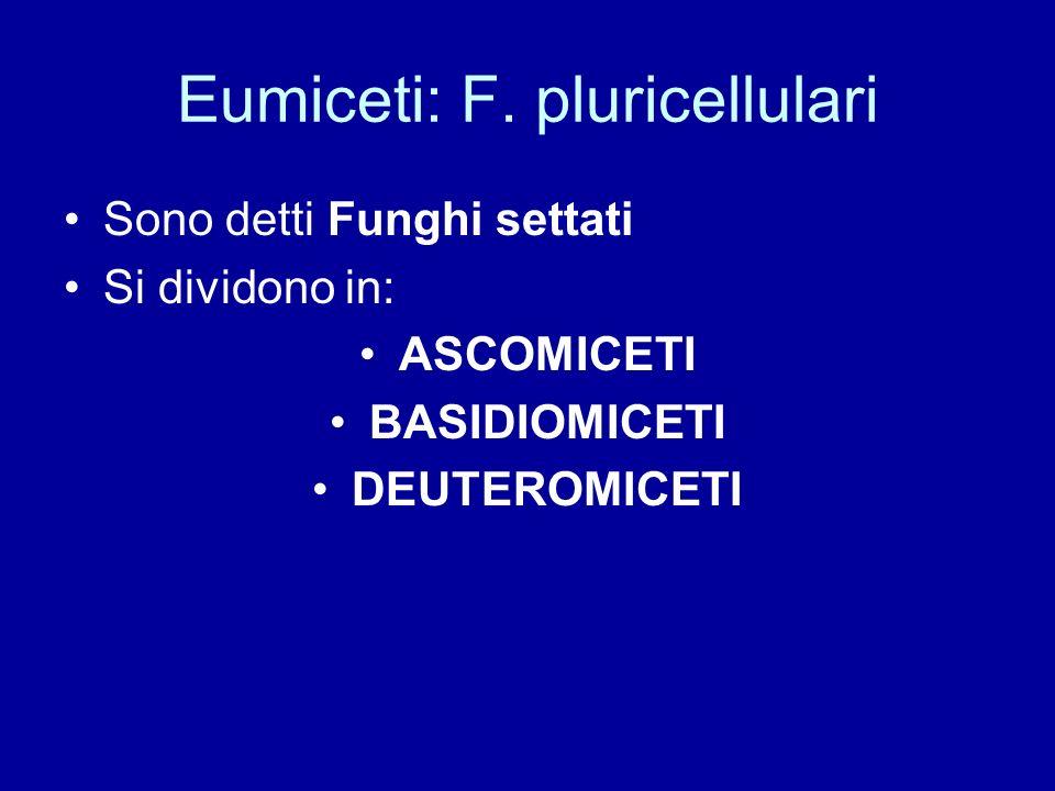 Eumiceti: F. pluricellulari
