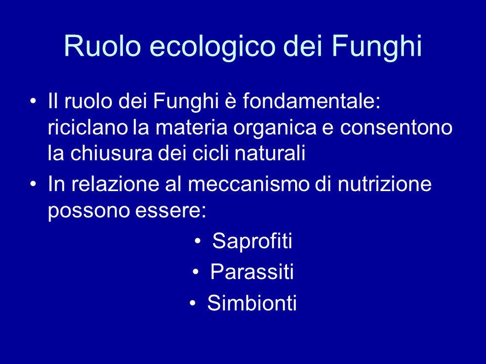 Ruolo ecologico dei Funghi