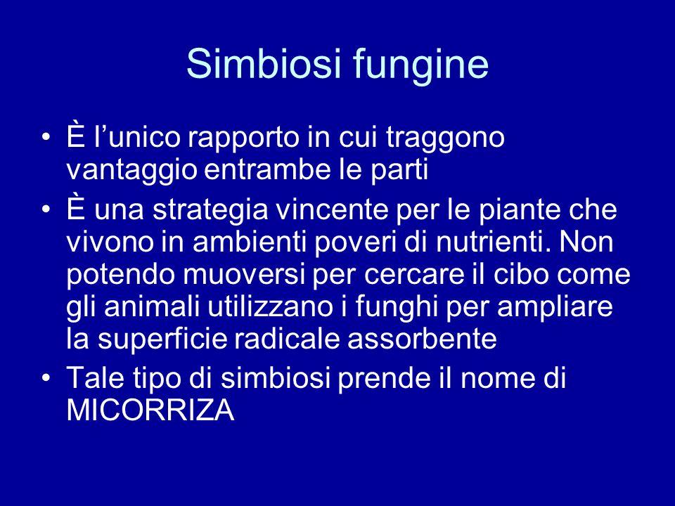 Simbiosi fungine È l'unico rapporto in cui traggono vantaggio entrambe le parti.