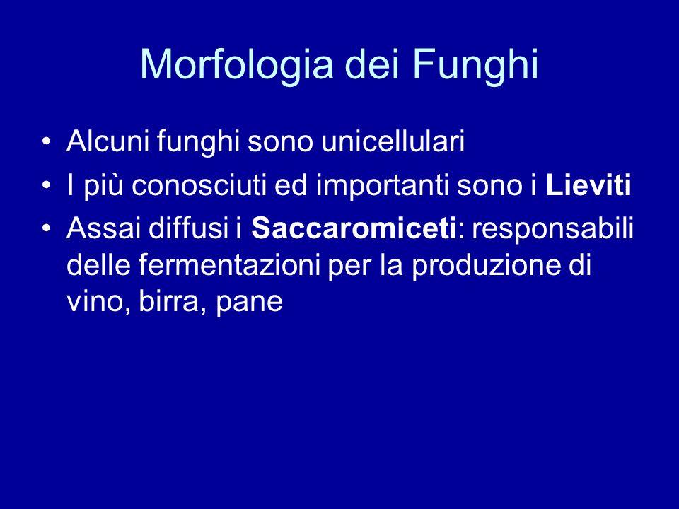Morfologia dei Funghi Alcuni funghi sono unicellulari