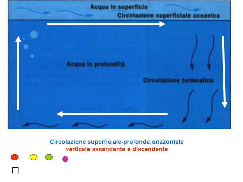 Circolazione superficiale-profonda:orizzontale verticale ascendente e discendente