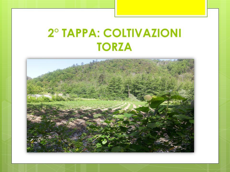 2° TAPPA: COLTIVAZIONI TORZA