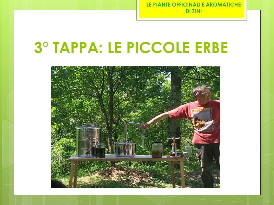 3° TAPPA: LE PICCOLE ERBE