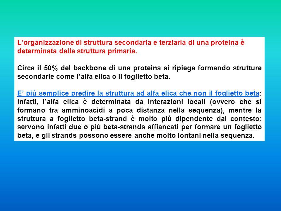 L'organizzazione di struttura secondaria e terziaria di una proteina è determinata dalla struttura primaria.